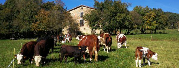 Les Vaques d'en Mel La llet fresca d'en Mel